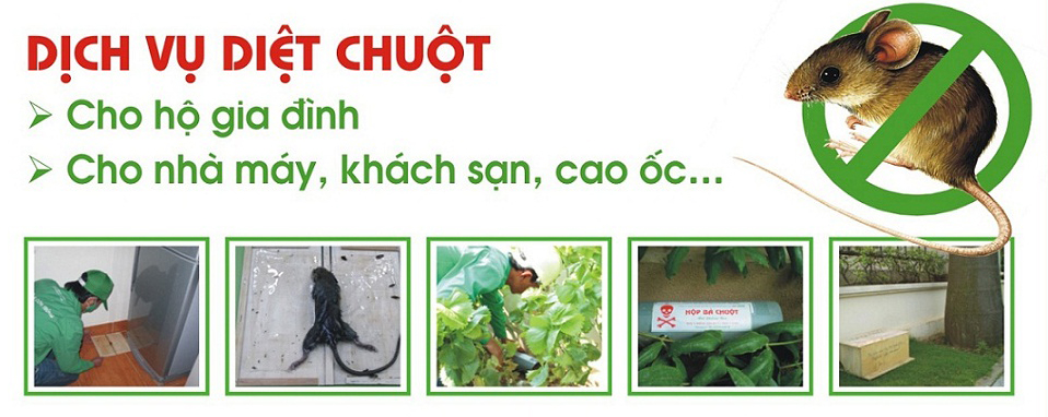 diet_chuot